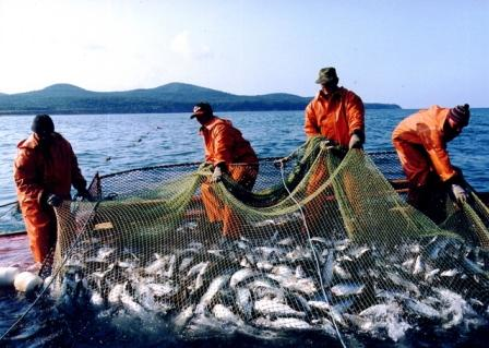 Рыбный промысел: станет ли Охотское море житницей для корейских рыбаков