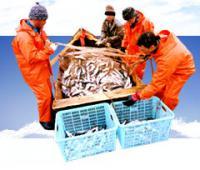 Рыбная отрасль на Камчатке: краевые власти подводят итоги уходящего года