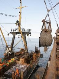 Рыбная отрасль Приморья: проблемы получения инвестиций и сбыта продукции тормозят развитие