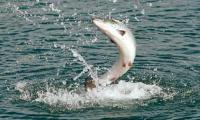Рыбная отрасль на Сахалине: особенности островной области